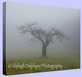 Shelagh Delphyne Photography - Artistic and Scenic Photography from
