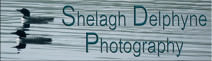 Shelagh Delphyne Photography - Finding the Art in Nature